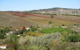 caminhada arruda dos vinhos sabugos moinho do ceu caminhando-2