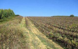 caminhada arruda dos vinhos sabugos moinho do ceu caminhando-14