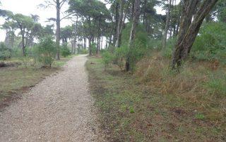 caminhada rota biodiversidade monsanto caminhando 8