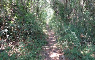 caminhada aldeia mata pequena cheleiros cascatas ancos caminhando-12