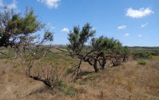 caminhada escarpas maceira vimeiro porto novo caminhando-8