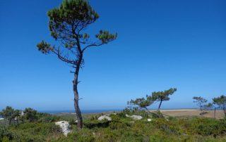 caminhada escarpas maceira vimeiro porto novo caminhando-6