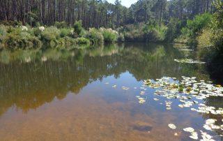 caminhada lagoas serra sintra lagoa azul rio da mula caminhando 13