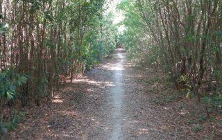 caminhada lagoas serra sintra lagoa azul rio da mula caminhando 17