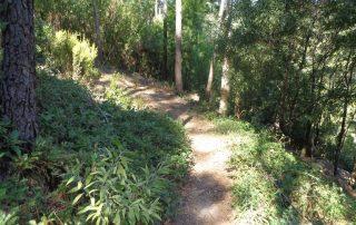caminhada lagoas serra sintra lagoa azul rio da mula caminhando 3