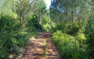 caminhada lagos ota alenquer montejunto caminhando-5