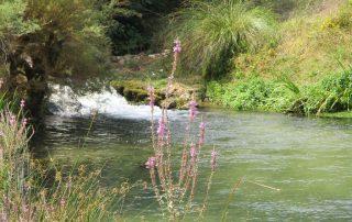 caminhada nascentes rio alviela caminhando-18