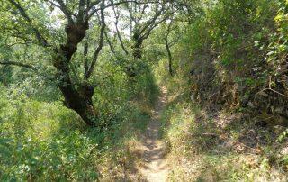caminhada aldeia mata pequena cheleiros cascatas ancos caminhando-4