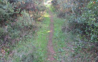 caminhada rota antas loures salemas 0lousa caminhando-11