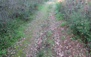 caminhada rota antas loures salemas 0lousa caminhando-9