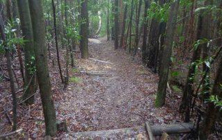 caminhada trilho do monge serra sintra caminhando-11