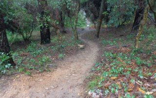 caminhada trilho do monge serra sintra caminhando-15