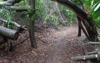 caminhada trilho do monge serra sintra caminhando-16