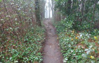 caminhada trilho do monge serra sintra caminhando-6