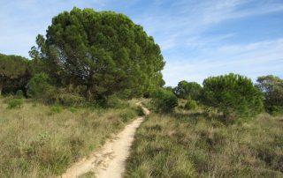 visita adega jose maria fonseca vila nogueira de azeitao caminhando-10
