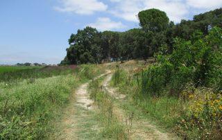 caminhada benavente leziria ribatejo arrozais canais sorraia caminhando-17