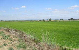 caminhada benavente leziria ribatejo arrozais canais sorraia caminhando-6