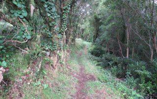 caminhada-caminhar-acores-subida-ao-pico-sao-jorge-graciosa-caminhando20