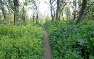 caminhada corredor verde monsanto lisboa caminhando-11