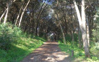 caminhada corredor verde monsanto lisboa caminhando-14