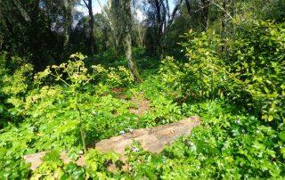 caminhada corredor verde monsanto lisboa caminhando-15