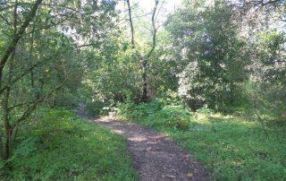 caminhada corredor verde monsanto lisboa caminhando-17
