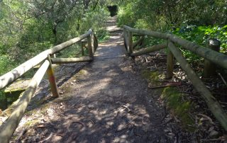 caminhada corredor verde monsanto lisboa caminhando-2