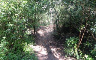 caminhada corredor verde monsanto lisboa caminhando-21