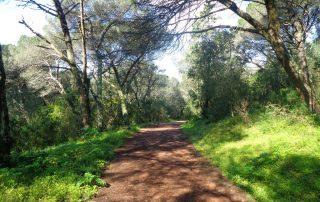 caminhada corredor verde monsanto lisboa caminhando-22