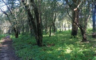 caminhada corredor verde monsanto lisboa caminhando-23