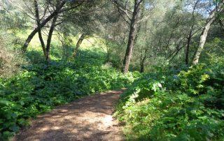caminhada corredor verde monsanto lisboa caminhando-3