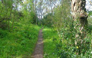 caminhada corredor verde monsanto lisboa caminhando-30