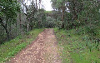 caminhada corredor verde monsanto lisboa caminhando-6