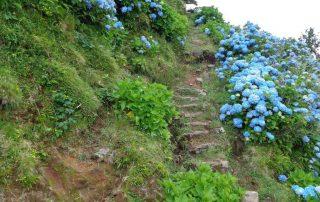 caminhada acores flores corvo faial caminhando-3