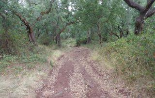 caminhada gruta olelas almargem do bispo gruta caminhando-23