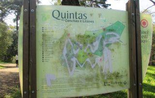 caminhada parques jardins conchas lilases caminhando-15