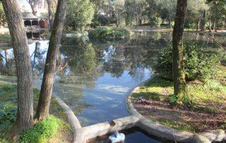 caminhada parques jardins conchas lilases caminhando-18