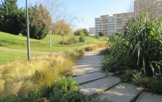 caminhada parques jardins conchas lilases caminhando-7