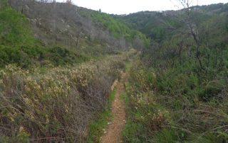caminhada pisao cascais serra sintra caminhando 24