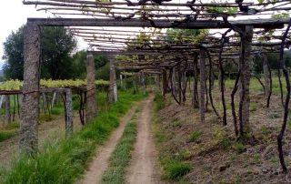 caminhada santiago de compostela caminho central portugues caminhando-24