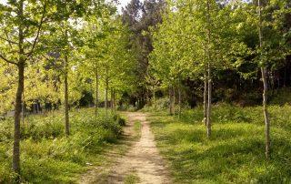 caminhada santiago de compostela caminho central portugues caminhando-6