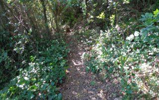 caminhada serra louro gaiteiros palmela arrabida caminhando 5