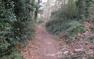 caminhada serra sintra santa eufemia regaleira seteais castelo dos mouros caminhando-14