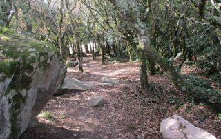 caminhada serra sintra santa eufemia regaleira seteais castelo dos mouros caminhando-30