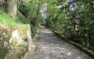 caminhada serra sintra santa eufemia regaleira seteais castelo dos mouros caminhando-5