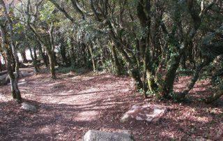 caminhada serra sintra santa eufemia regaleira seteais castelo dos mouros caminhando-6