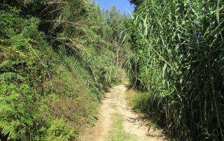 caminhada vale rio cuco sobreiro mafra caminhando 10