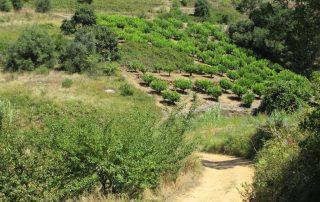caminhada vale rio cuco sobreiro mafra caminhando 16