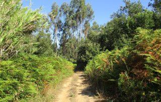 caminhada vale rio cuco sobreiro mafra caminhando 3