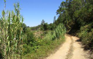 caminhada vale rio cuco sobreiro mafra caminhando 8